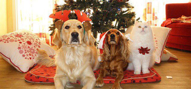 Una mascota es un gran regalo para tu familia, pero no un juguete