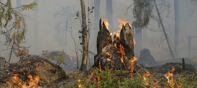 #STOPINCENDIOS Luchemos todos contra el horror de las llamas