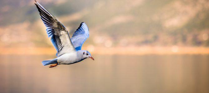 Cuidamos las aves desde tierra, ¡la naturaleza necesita que la protejamos en todos sus niveles!