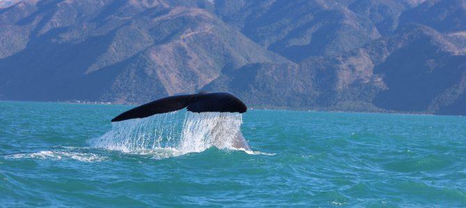 Proteger las ballenas con nuestra mejor energía, CUESTE LO QUE CUESTE