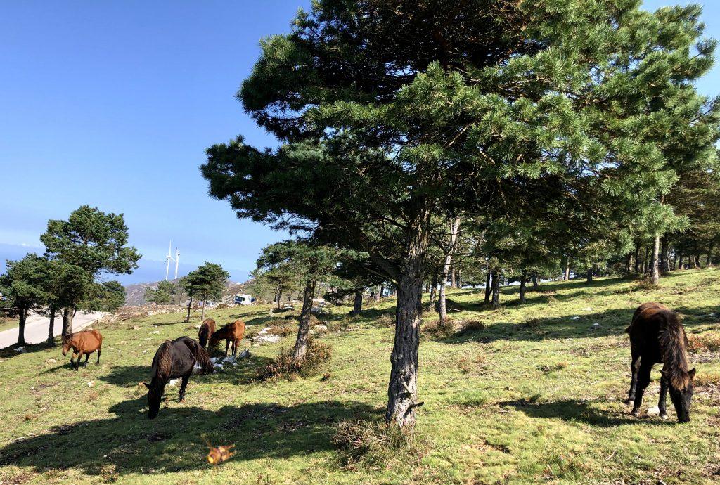 caballos en el Parque eólico Asturias