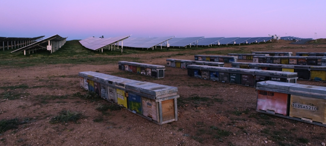 Las renovables y la biodiversidad, una convivencia perfecta